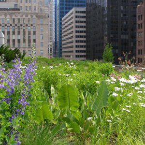 Lecture: Green Roofs and Flood Mitigation, Irish Landscape Institute
